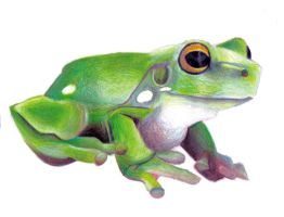green tree frog by rz250