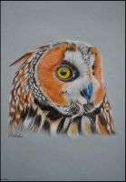 Long-eared owl by Verenique
