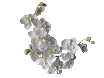White Orchids PNG by the-night-bird
