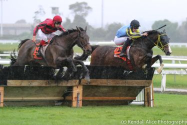 Thoroughbred racehorse hurdler stock by Valkyrie-Stock