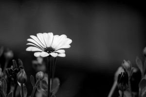 Black and White Flower... by Eric-Casper