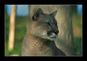 the puma by nostromo426