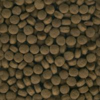 Seamless Dog Food Texture Tile by FantasyStock