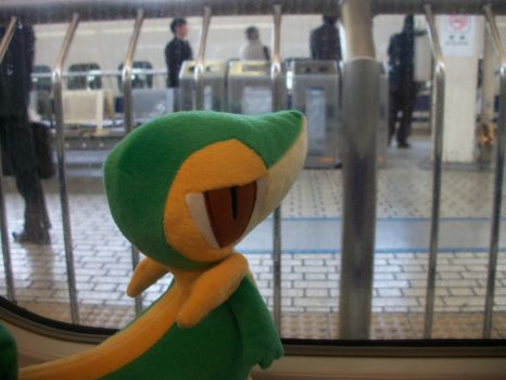 Snivy Watches....1 by BrownieParadox