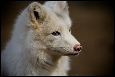 White Fox re-submit. by Eman333