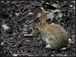 Young Woodland Bunny by cycoze