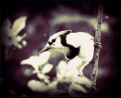 A Jay In Fall by surrealistic-gloom