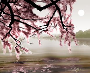blossoms on the lake by dhqx