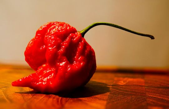 Carolina Reaper by atomkat