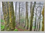 The mist and the forest by Swaroop