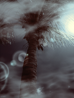 Tropical Skynight by Crybaby84