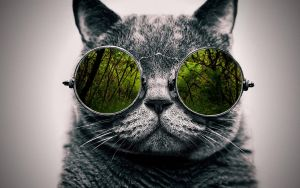 Cool Cat: Nature 2 by ToValhalla