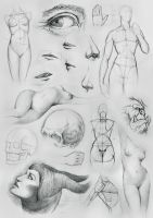 Anatomy Sketches and Other by NaamahVonhell