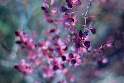 Lots of tiny flowers.. by armag3d0n