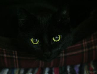 All cats are grey in the dark by hoschie