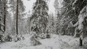 Winter Forest Stock 2 by AcceptWhatIs