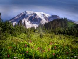 Wildflowers on the Mountain by KathyWeaverPhotogirl