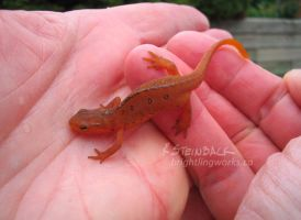 A newt in the hand is ... really cute by brightling