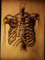 rib cage by Pencil-face