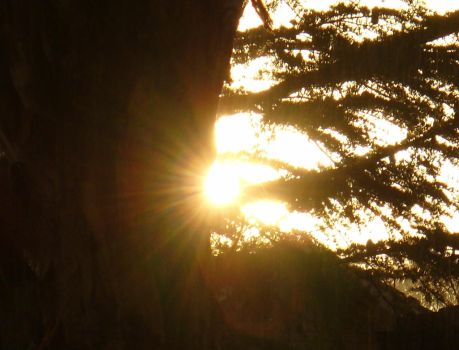 Sun through tree by IAmMarauder