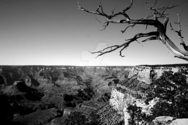 Grand Canyon by mellybear