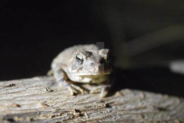 Land Toad by KalitheArtist