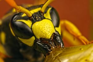 Baited Wasp by dalantech
