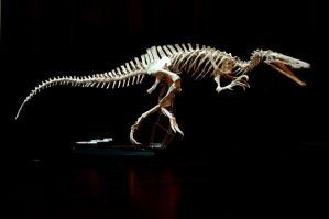suchomimus skeleton1 by hannay1982