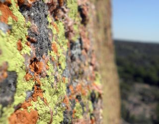 Green and orange lichen by must-love-spiders