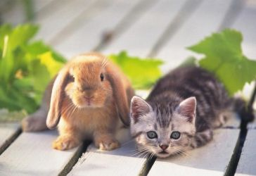 rabbit and a little cat by OfficialGirl