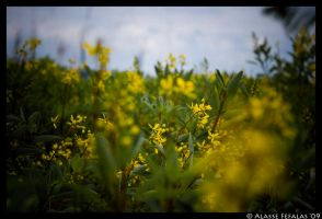 Yellow by alasse91