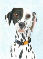 Dalmatian in coloured pencil by Isabelproffitart