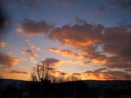 Rising Orange. by Sparkle-Photography