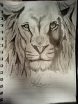 Lion - Pencil drawing.