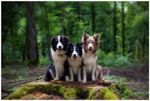 trois chiens by corniger-aries