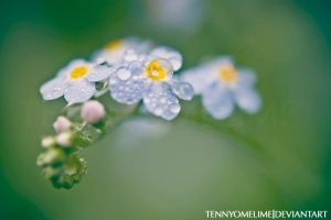 Blue Flower Droplets by tennyomelime