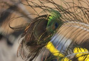 windy feathers- old lense by DieCooleSocke
