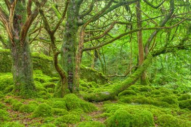 Emerald Forest - Killarney National Park by somadjinn