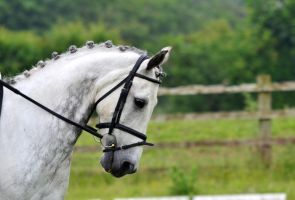 Dressage Stock 004 by HKW1994