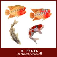 Fishes PNG by Kmhwhitney