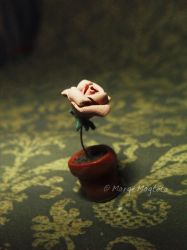 Old Rose by margemagtoto