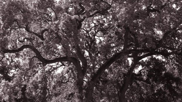 tree of life by adderx99