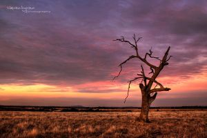Dead Lonely by simonebyrne