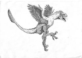 Tianyuraptor -or not?- by Smnt2000