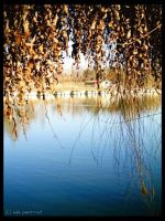 between leaves and water... by bucuresti