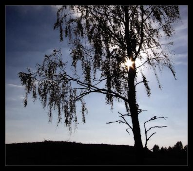 The Birch by DSent