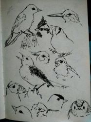 Bird Sketches by leafpoolTC