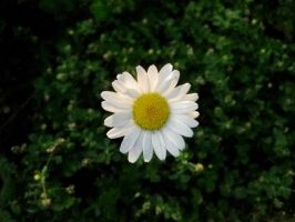 Flower 02 by acurmudgeon