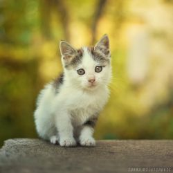 Little furball by ZoranPhoto