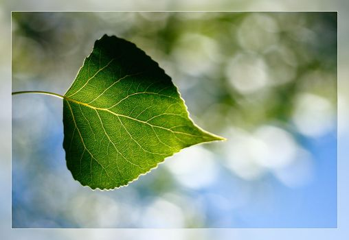 Leaf and bokeh by Javi-SuperStar